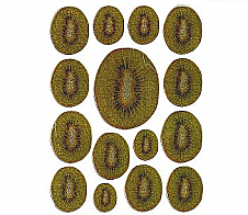 Laser Stickers Kiwifruit